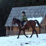 Ergela konja
